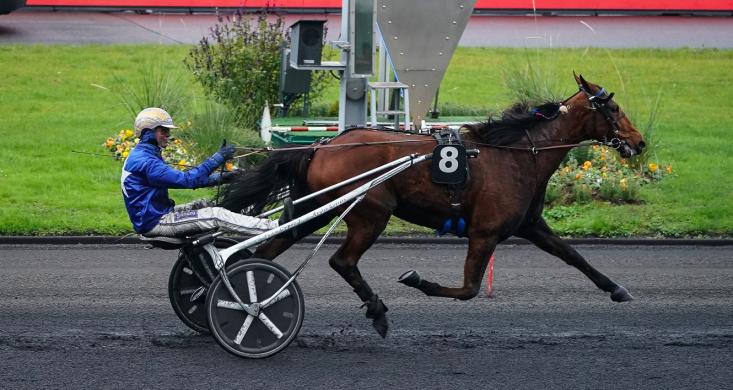 Préparatoires au Critérium : Gunilla d'Atout et Gallant Way lauréats |  Equidia